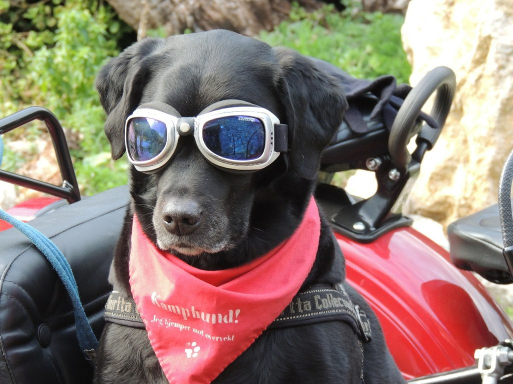 Dog wearing sunglasses on Vacation
