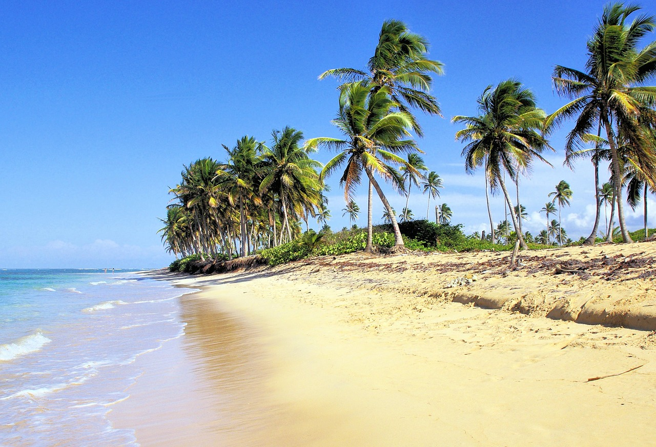 Palm trees and a long sandy beach in the Domincan Republic.